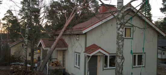 20131213 Rusina_puu-6