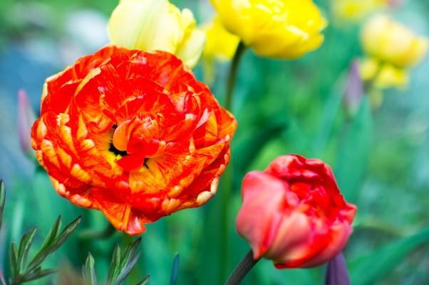 Puutarhailut 2015 – Osa 5 Toukokuun puoliväli ja muutama uusi kasvi (Päivite